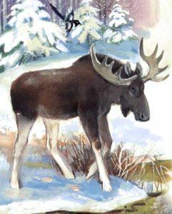 охота на лось в пермском крае