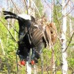 охота на вальдшепа ульяновск