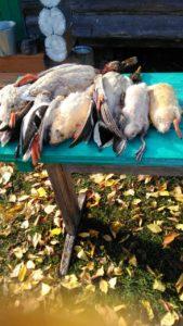 охота на утку васильевские острова