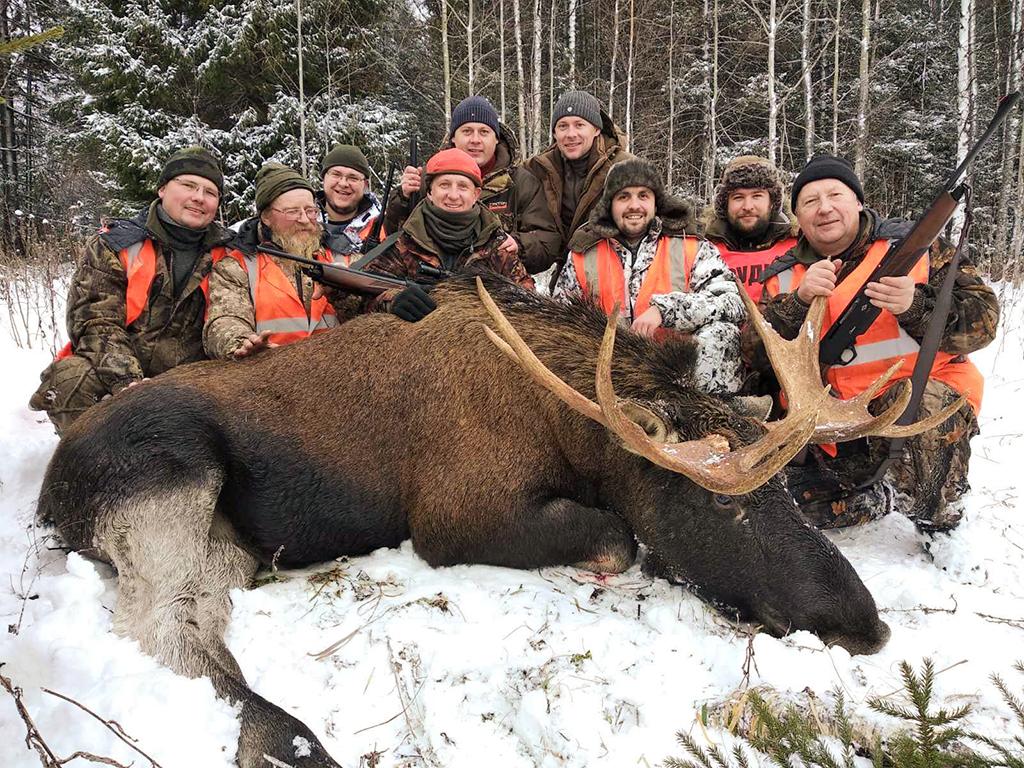 охота на лосят в пермском крае 2019